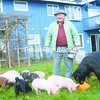 It's chow time for piglets, a rottweiler and pug on Leonard Swinton's Mooers farm.<br><br>(P-R Photo/Andrew Wyatt)