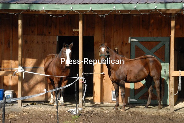 Hons (left), a 23-year-old quarter horse retired from dressage, and Taz, a 14-year-old registered paint horse retired from hunter jumpers, seem to be enjoying their time off as they step outside to enjoy the sunshine. Both horses are owned by Karen White of Schuyler Falls.<br><br>(P-R Photo/Joanne Kennedy)