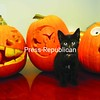 A black kitten named Domino tries to steal the show from the jack-'o-lanterns created by Kelli Catana and Suzanne Moore. The pumpkins were spoken for, but the kitty needs a loving home. Interested? Call Moore at 565-4138.<br><br>(Staff Photo/Kelli Catana)