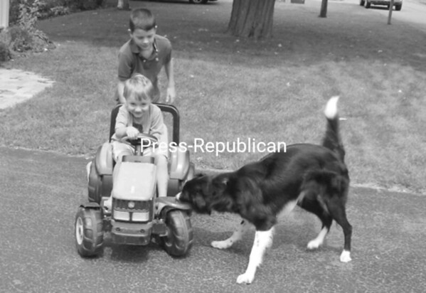Emmett Coffman, 3, can't ride his kid-size lawn tractor without his border collie, Boogie, using it to practice his innate herding skills. Here, as Emmett's brother, Kobe LaRoche, helps steer in the driveway of their Champlain home, the dog maneuvers to the front of the tractor at every turn.<br><br>(Staff Photo/Suzanne Moore)