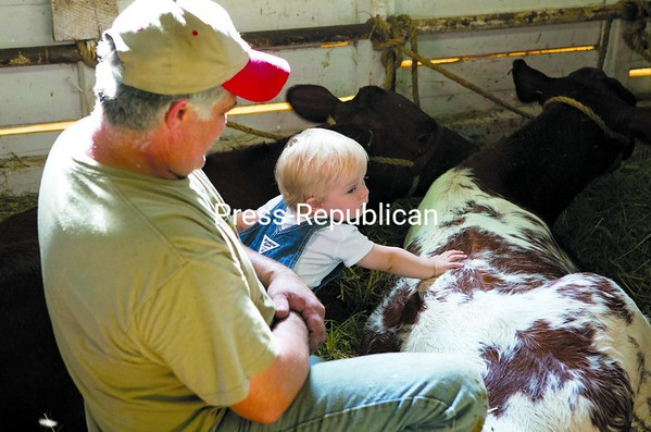 Dale Wood watches as 15-month-old Carson LaFlesh of Burke pets a shorthorn beef named Marble at the Franklin County Fair.<br><br>(P-R Photo/Gabe Dickens)