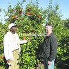 Jamaican Camp Manager  Glenroy Manning (left) and Chazy Orchards General Manager Jay Toohill look over the fruit on a tree at Chazy Orchards. Manning has been coming to the orchard to pick for 37 years.(P-R Photo/Bruce Rowland)