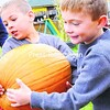 Austin Dubuque (left) and Logan Wood haul the biggest pumpkin they could find to their wagon at Bankers Orchard in Plattsburgh on Saturday. With Halloween just a few weeks away, look for more people to be picking up pumpkins to make jack-o'-lanterns.<br><br>(P-R Photo/Rob Fountain)