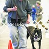 Dawn Marini of Malone leads her pitbull Neapolitan mastiff, Jackie, through an obedience course during the annual Dog Breed and Obedience Fun Match at the Crete Memorial Civic Center Sunday morning. Jackie also received her Therapy Dog International and Canine Good Citizen certification at the event, which was sponsored by the Clinton County Canine Club.<br><br>(P-R Photo/Gabe Dickens)