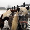 Elle (front) and Lil Cowgirl, two of four miniature horses at Breezy Head Farm in the Town of Plattsburgh, wait for owner Jane Hagar-Babbie to bring them inside their barn out of the snow. According to the National Weather Service, today will be clear but quite cold, with a high near 22 degrees.<br><br>(STAFF PHOTO/KELLI CATANA)