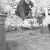 Ed Supple transplants yarrow in his front yard in Plattsburgh while enjoying spring weather. In addition to mulching, Supple also planted King Edward yarrow, pink heather and silver mound artemisia, all hardy perennials for the North Country.<br><br>(P-R PHOTO/RACHEL MOORE)