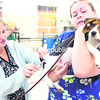Amanda Lutzy (left), a veterinarian at Champlain Valley Veterinary Services, administers a rabies vaccine to Lady, a 4-month-old beagle held by veterinary assistant Adrianna Melis during a free rabies clinic at the Keeseville Fire Station on Thursday evening. The Clinton County Health Department clinics for dogs, cats and ferrets run from 6 p.m. to 8:30 p.m. every Tuesday and Thursday through Oct. 17 at various locations. The clinic will be at the Plattsburgh Public Works building on Idaho Avenue on Tuesday, Oct. 1, and the Champlain Fire Station on Thursday, Oct. 2. Pets must either be on a leash or in a carrier to be admitted. <br><br>(P-R PHOTO/GABE DICKENS)
