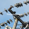 Pigeons huddle together on electrical wires for warmth on South Platt Street on Wednesday in Plattsburgh. Forecast for the next couple of days calls for temperatures to be in the mid 20s, warming up on Sunday to the low 40s.  <br><br>(ROB FOUNTAIN/STAFF PHOTO)