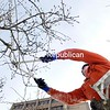 With temperatures in the single digits, SUNY Plattsburgh Grounds Department employee Gary Barnaby trims crabapple trees along Rugar Street. The trees could not be trimmed early in the fall due to nearby construction, when that part of the campus was fenced off to the public.<br><br>(ROB FOUNTAIN/STAFF PHOTO)