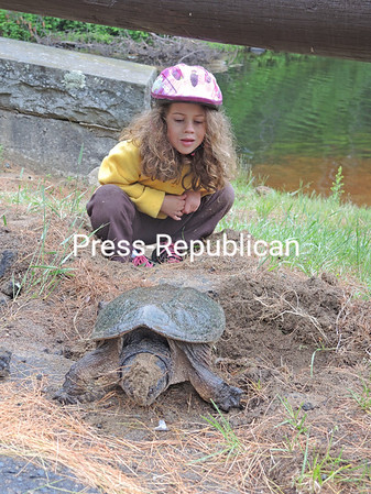 JOANNE KENNEDY/P-R PHOTO  6-28-2016<br /> Mackenzie Kennedy of Mount Holly, Vt., gets a firsthand look at nature at its finest as she watches a turtle laying and burying its eggs at Fish Creek Pond Campground near Saranac Lake. Mackenzie was camping with family at the state park.