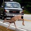 ALVIN REINER/P-R PHOTO 10-10-2016<br /> A deer bounds across Route 9 in Elizabethtown on a recent autumn day, fortunately ahead of an oncoming SUV. Whitetail have been dining closer to roadways this fall, feeding on the bountiful crop of apples.