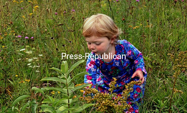 One-year-old Everleigh Joseph from Saranac Lake stops to smell and pick flowers at Marcy Field in Keene Valley. Everleigh adds to the scene with her dress adorned with blossoms. ALVIN REINER/ P-R PHOTOS