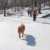 Red, a red retriever, leads the way as avid hikers Bonnie Rondeau (front), Ruby Salley and Laurel Rosenthal ascend Poke-O-Moonshine Mountain following the truck trail. Due to milder temperatures the past week, there is less snow and more ice, making crampons or microspikes the traction of choice. From the intersection of Route 9 and Route 9N in Keeseville, follow Route 9 south for around 8.5 miles to the trailhead on the right.<br /> JOANNE KENNEDY/ P-R PHOTO