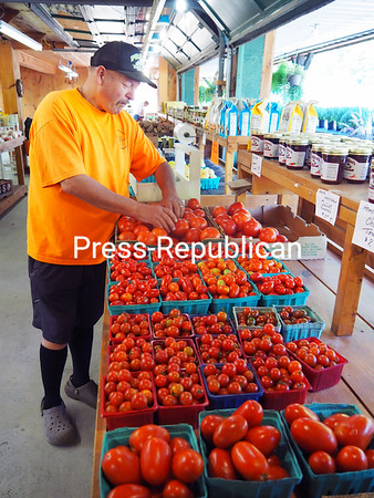 Darcy Pray, co-owner of Pray's Family Farm & Stand, sorts through the many varieties of tomatoes. The family business, located in Keeseville and Plattsburgh, has been in operation since 1940. Local produce stands around the region now have fresh tomatoes, beans, corn, squash, cucumbers and pumpkins for customers to choose from. JOANNE KENNEDY/ P-R PHOTO
