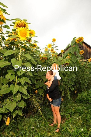 Erin Vennie-Vollratah and her 2-year-old daughter, Anya, of Moonstone Farm in Saranac Lake, look up at a field of towering sunflowers, some as tall as 12 feet. Pumpkins have also reached maturity on the farm, too — big and orange. JACK LADUKE/ P-R photo
