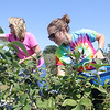 Alyssa Crockett (right) and Kim Crockett reach for the bluest blueberries before moving on to pick raspberries as they enjoy a day berry picking at Rulfs Orchard in Peru. Rulfs features strawberries, blueberries and strawberries available for picking and are estimated to remain in season until the end of the month.<br /> KAYLA BREEN/ STAFF PHOTO