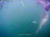 Rachael Underwater Session 1, Cam 1 - 3006