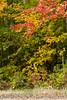 fall_d-8314