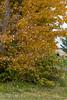fall_d-8329