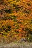 fall_d-8315