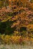 fall_d-8316