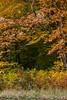 fall_d-8317