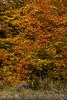 fall_d-8318