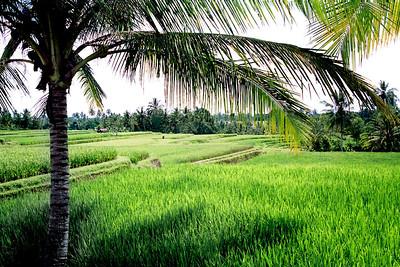 Indonesia: Bali, Java, Sulawesi, Lombok-1990