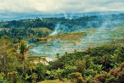 typical beautiful Rice terraced paddy fields