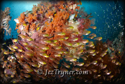 The amazing corals at Nudi rock, Fiabacet, Misool, Raja Ampat, Indonesia, Indian ocean, Asia