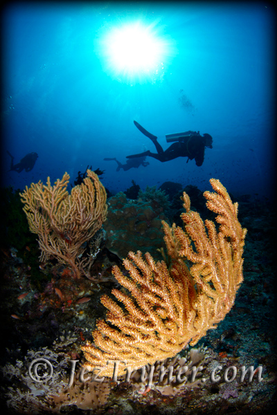 Divers siloutted against the sun behind a yellow sea fan, Crystal rock, Gili Lawalaut, Indonesia, Indian ocean, Asia