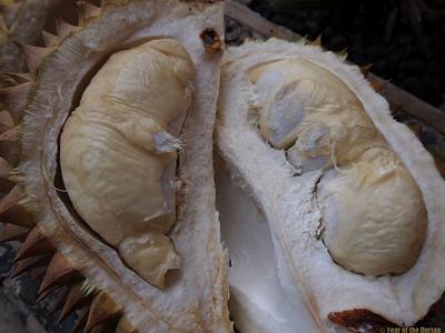 http://www.yearofthedurian.com/2015/04/durian-sibadak-at-luwus-horticultura.html http://www.yearofthedurian.com/2015/04/durian-sibadak-at-luwus-horticultura.html