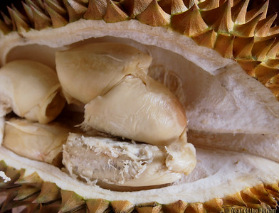 http://www.yearofthedurian.com/2015/04/where-to-go-for-durian-abundance-in.html