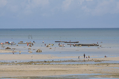 People digging up rocks at low tide to sell for house building, Dobo.