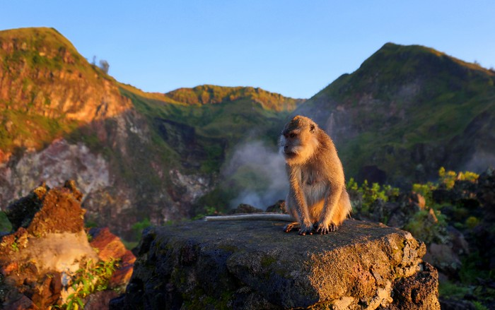 Monkey chilling out at sunrise atop Mount Batur.