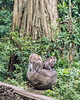 Balinese long-tailed macaque family (Macaca fascicularis), Monkey Forest, Ubud, Bali