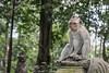 Meditative monkey sitting on a carved pedestal, Monkey Forest, Ubud, Bali