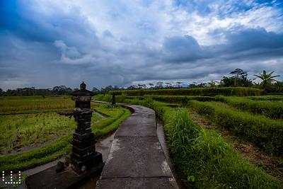 Rice road
