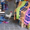 Rooster in the Shop