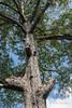 Old tree on the grounds of Goa Gajah temple, Ubud, Bali, Indonesia