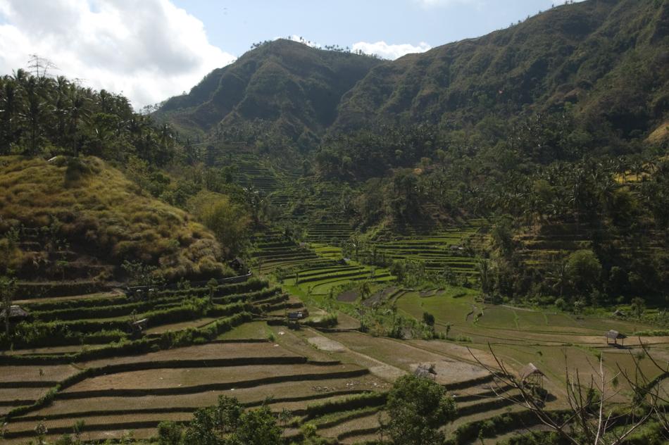 Rice Terraces, northern Bali