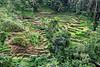 Tegallalang rice paddies, Ubud, Bali