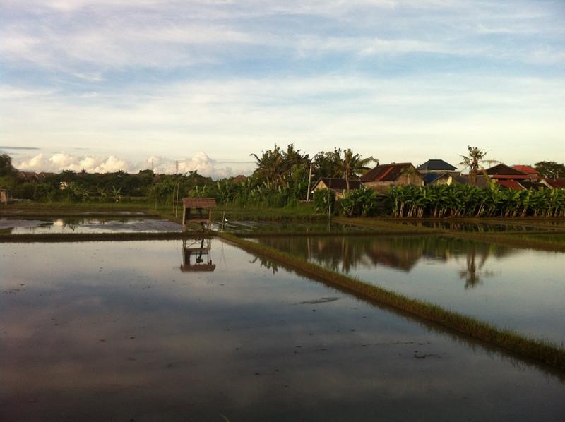 Rice Paddies, Seminyak, Bali