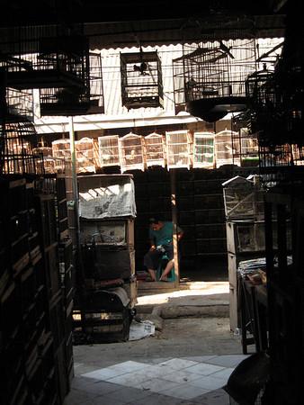 Bird Market Jakarta August 2008