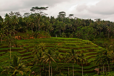 Where to Stay In Ubud, image copyright Kevin Poh