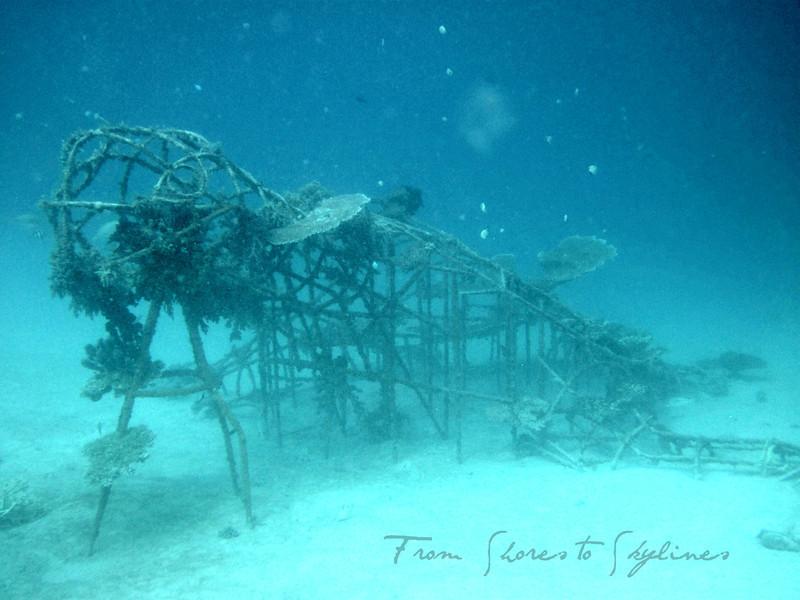 Bio-wreck turtle
