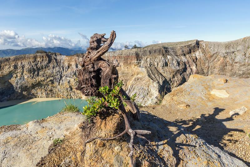 Tiwu Nuwa Muri Koo Fai crater lake with tree stump, Kelimutu National Park, Flores Island, Indonesia