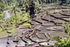 Rice terraces at planting season, near Detusoko, East Nusa Tenggara, Indonesia