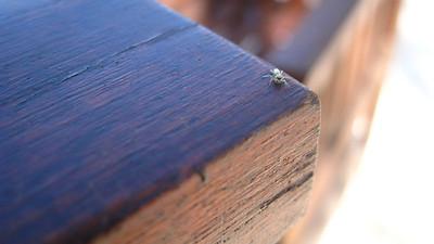 Spider — Gili Trawangan Island, Indonesia