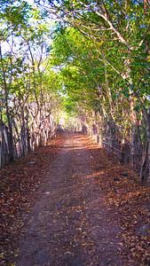Leafy backroad across the island — Gili Trawangan Island, Indonesia